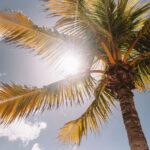 Die Sonne aus Teneriffa nach Hause bringen - Tageslichtlampe oder Infrarotlampe?